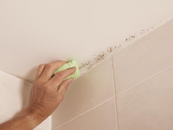 Pittura antimuffa forl faenza vernice per muffa sui muri interni anticondensa prezzi - Perche si forma la muffa in casa ...